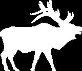 elk-white